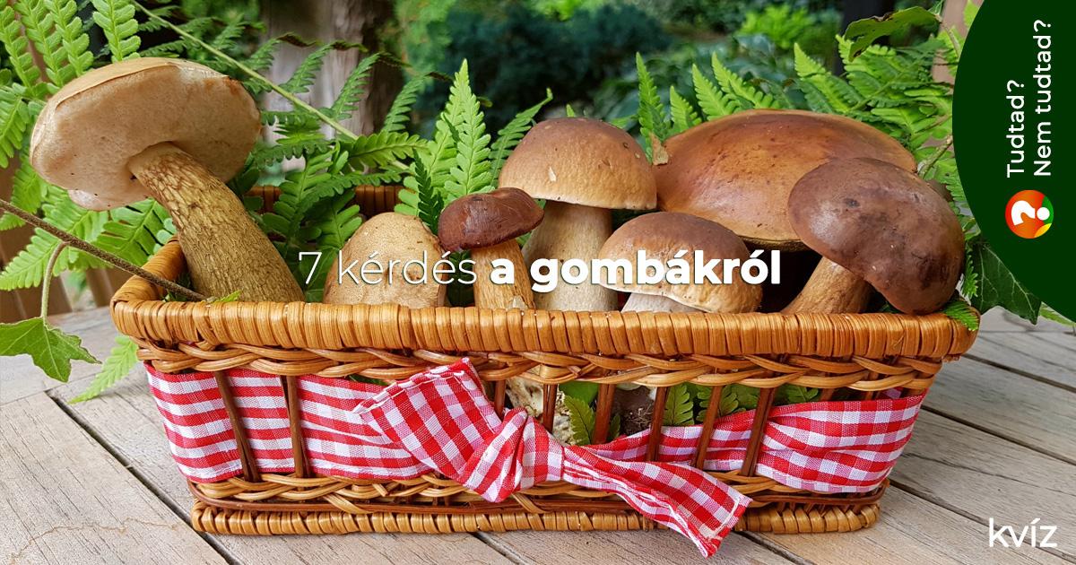 7 kérdés a gombákról