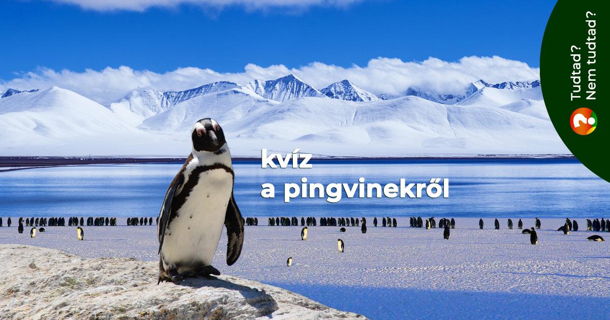 Kvíz a pingvinekről