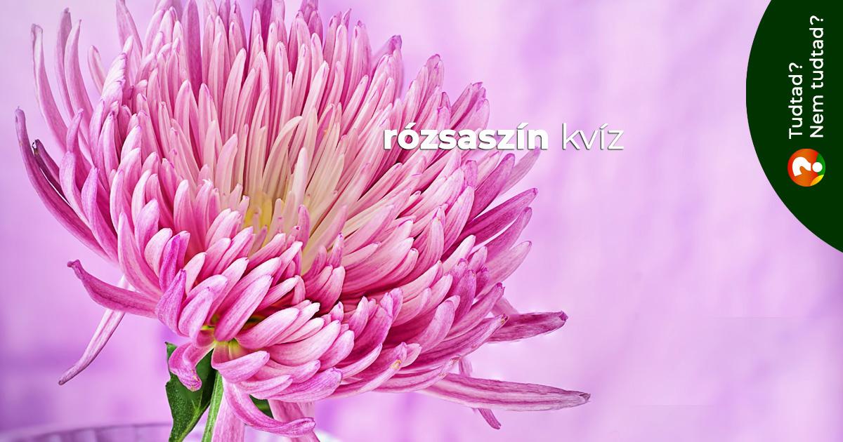 Rózsaszín kvíz