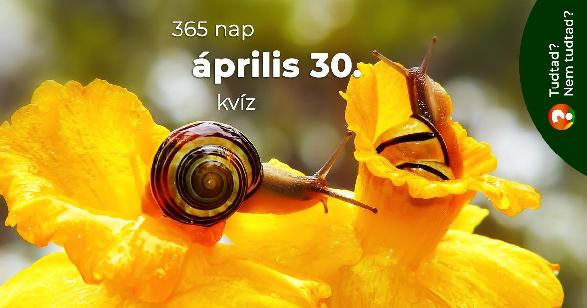 Kvíz - április 30.