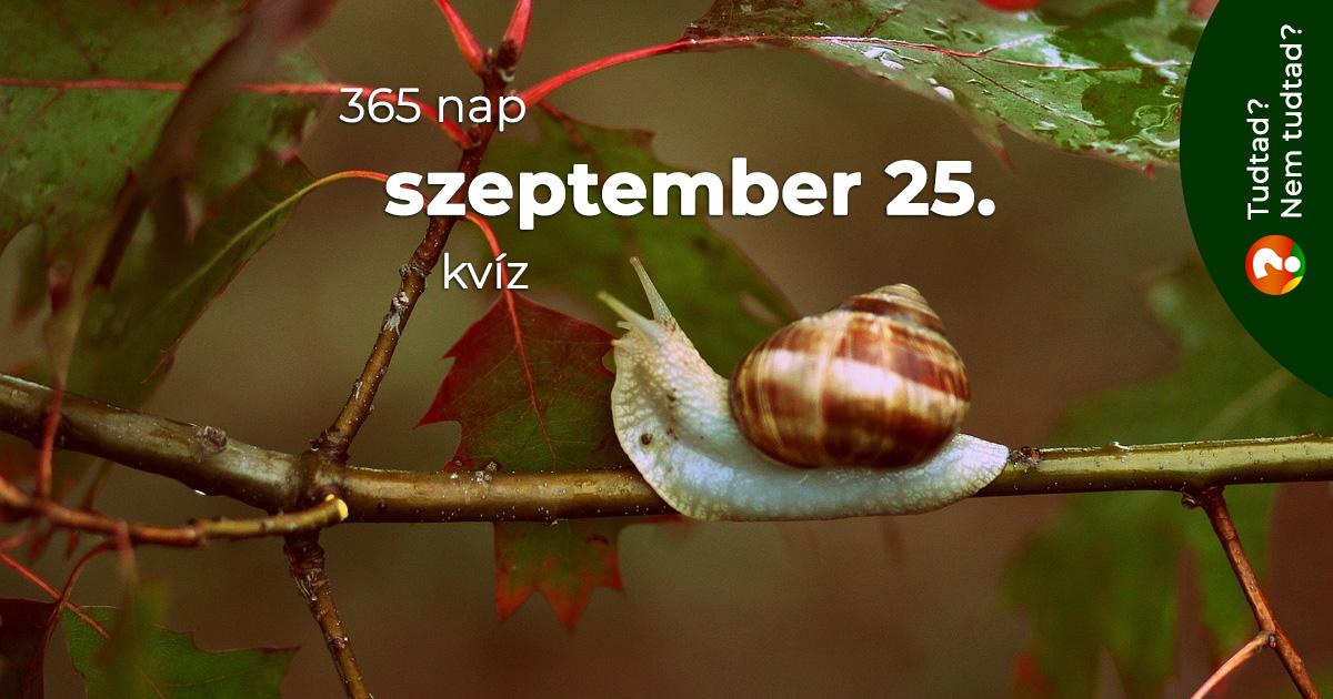 Kvíz - szeptember 25.